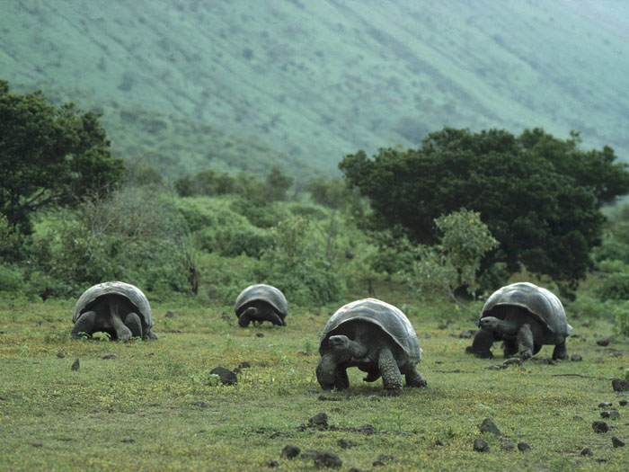 here s what you re missing at the galapagos islands