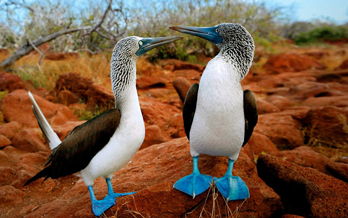 The Galapagos Islands Are The World S Best Zoo